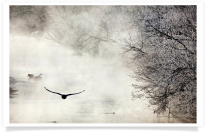 Flying Swan River Mist