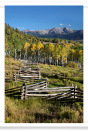 Yellow Aspens and Rail Fence