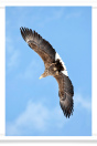 Eagle with Outstretched Wings
