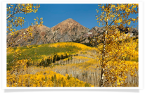 Foreground Aspens along Kebler Pass