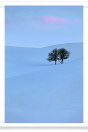Snowy hillside and barren trees