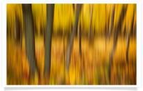 Illinois Fall Forest Blur