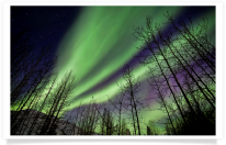 Aurora Silhouetted Trees