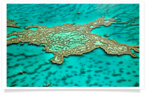 Great Barrier Reef Coral and Lagoon