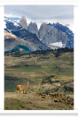 Guanaco and Towers
