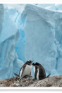 adventure; antarctic; antarctic peninsula; antarctica; awe; beautiful; chick; cold; dramatic; environment; extreme; gentoo; landscape; nature; outcropping; penguin; peninsula; polar; pole; pristine; remote; travel; wilderness; winter; wonderland