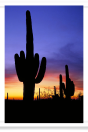After Sunset in Saguaro