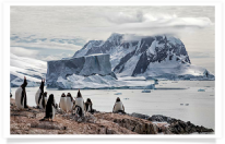 adventure; antarctic; antarctic peninsula; antarctica; awe; bay; beautiful; blue; cold; colony; cruise; dramatic; environment; extreme; floating; frozen; gentoo; glacial; glacier; gorgeous; ice; iceberg; icecap; icy; island; landscape; majestic; mountain; nature; ocean; pack ice; penguin; peninsula; perfection; petermann; polar; pole; pristine; reflection; remote; sea; seascape; snow; travel; water; white; wilderness; winter; wonderland